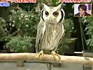 Cool owl can transform in 3 modes.