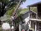 Tree cutting ladder accident